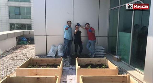 """AvivaSA Doğa Kulübü'nden """"Ofiste Tarım"""" Etkinliği"""
