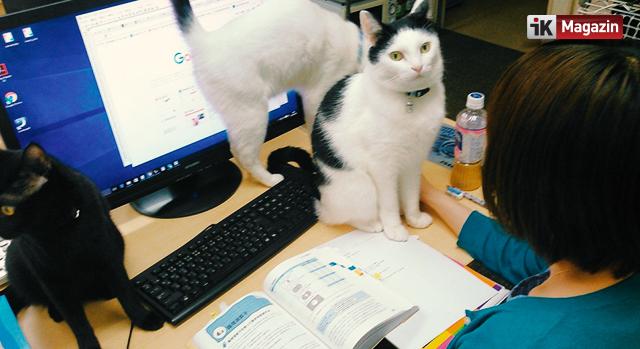 Kedi Sahiplenen Çalışanlarına Prim Veren Şirket