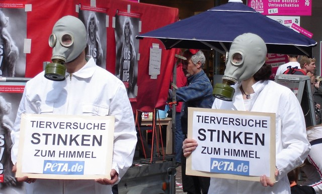 Volkswagen CEO'su Hayvanseverlerden Özür Diledi