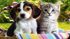 Şirketlerde 4 Ekim Dünya Hayvanları Koruma Günü