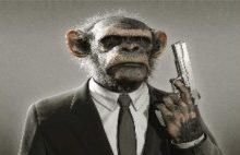 Photo of Prim Sistemine İsyan Eden Maymun