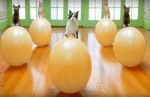 Photo of Kediseverlerin Bayılacağı Reklam Filmi