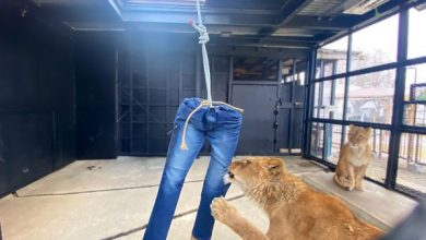 Photo of Hayvanat Bahçesinin Yeni Gelir Kaynağı